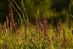 Sommargräs Fotografering för Bildbyråer