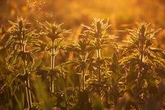 Sommargräs exponerat av varmt orange solljus royaltyfri foto
