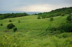 Sommargräs på en molnig dag Arkivfoto