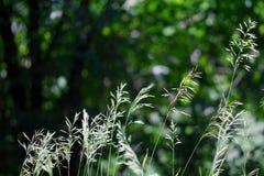 Sommargräsbakgrund arkivfoto