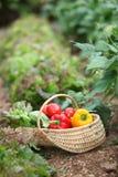 sommargrönsaker Royaltyfri Foto