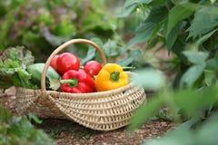 sommargrönsaker Fotografering för Bildbyråer