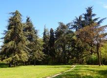 Sommargranskog, skogglänta Arkivfoto