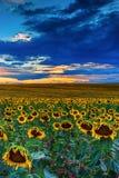 Sommarhimlar i Colorado arkivfoton