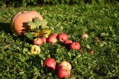 Sommarlandskapäpplen och pumpa royaltyfri fotografi