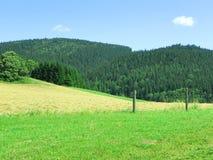 Sommarlandskap Arkivfoto