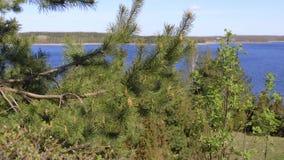 Sommarlandskap av Braslav sjöar arkivfilmer
