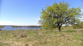Sommarlandskap av Braslav sjöar stock video
