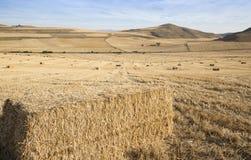 Sommarlandskap av ett fält av baler av hö i Viloria de Rioja, Burgos Royaltyfri Bild