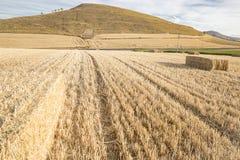 Sommarlandskap av ett fält av baler av hö i Viloria de Rioja, Burgos, Spanien Arkivfoto