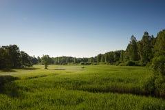Sommarlandskap av gröna trän och floden som är bevuxet med lösa gräs Äng som omges av en blandad skog royaltyfri bild