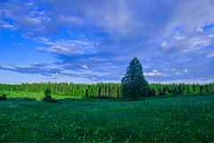 Sommarlandskap, björkäng, himmel i bakgrunden Arkivbilder