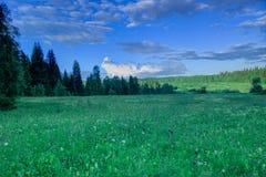 Sommarlandskap, björkäng, himmel i bakgrunden Royaltyfri Fotografi