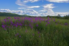Sommarlandskap, en blomstra äng Arkivbilder