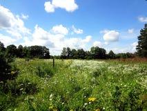 Sommarlandskap, ett fält med ljusa blommor Royaltyfria Bilder
