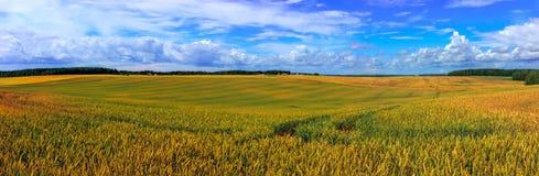Sommarlandskap, grönt fält och blå molnig himmel Arkivfoton