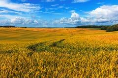 Sommarlandskap, grönt fält och blå molnig himmel Royaltyfria Foton
