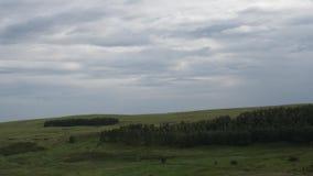 Sommarlandskap i berg och mörker - blå himmel Timelapse Moln är inflyttningen den blåa himlen över träden stock video