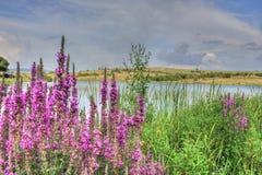 Sommarlandskap i bulgarisk bygd Fotografering för Bildbyråer