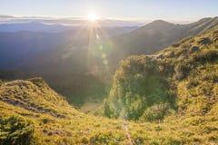 Sommarlandskap i Carpathiansna med kon som betar på ny gr Royaltyfria Bilder