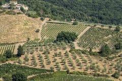 Sommarlandskap i Chiantiregionen Tuscany Royaltyfri Foto