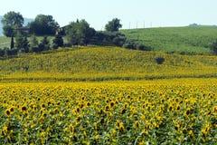 Sommarlandskap i gränser (Italien) Arkivfoto