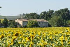 Sommarlandskap i gränser (Italien) Arkivfoton