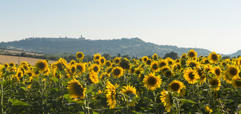 Sommarlandskap i gränser (Italien) Arkivbild