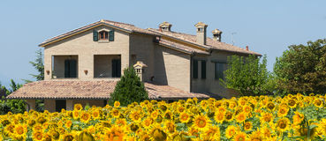 Sommarlandskap i gränser (Italien) Fotografering för Bildbyråer