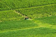 Sommarlandskap i Langhe (Italien) Royaltyfria Foton
