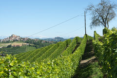 Sommarlandskap i Langhe (Italien) Royaltyfria Bilder