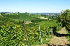 Sommarlandskap i Langhe (Italien) Arkivfoto