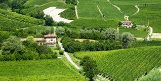 Sommarlandskap i Langhe (Italien) Royaltyfri Bild