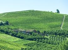 Sommarlandskap i Langhe (Italien) Royaltyfri Fotografi