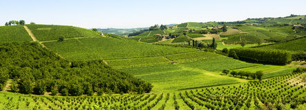 Sommarlandskap i Langhe (Italien) Arkivfoton