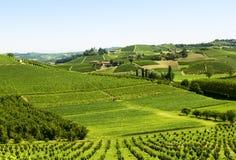 Sommarlandskap i Langhe (Italien) Arkivbild