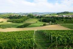 Sommarlandskap i Monferrato (Italien) Royaltyfria Bilder