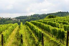 Sommarlandskap i Monferrato (Italien) arkivbild