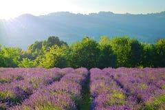 Sommarlandskap i Piedmont, lavendelfält Fotografering för Bildbyråer