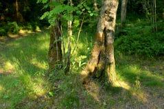Sommarlandskap i skog royaltyfri bild