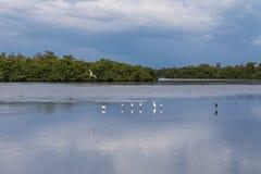 Sommarlandskap, J n Ding Darling National Wildlife fristad Arkivbilder