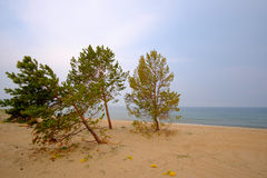 Sommarlandskap, Lake Baikal arkivfoton