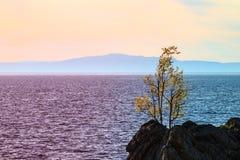 Sommarlandskap, Lake Baikal royaltyfri foto