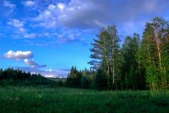 Sommarlandskap med äng- och trädskoghimmel Royaltyfri Fotografi