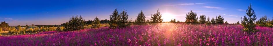 Sommarlandskap med den blomstra ängen, soluppgång arkivbilder