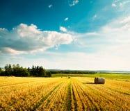 Sommarlandskap med det mejade vetefältet och moln Royaltyfri Fotografi
