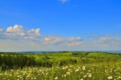 Sommarlandskap med en kamomilläng Arkivfoton
