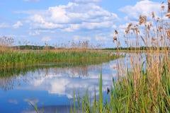 Sommarlandskap med en liten flod Arkivbilder