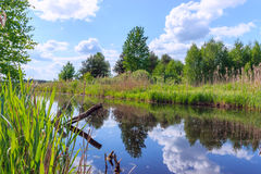 Sommarlandskap med en liten flod Arkivfoto