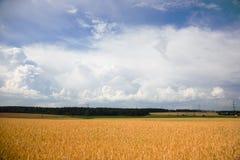 Sommarlandskap med en veteåker Arkivfoto